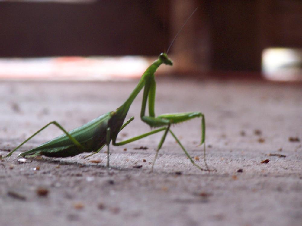 Belize Diary: Fauna